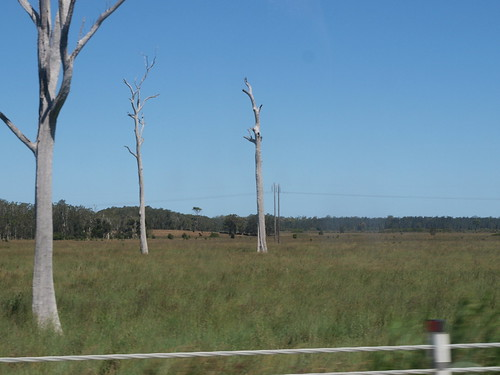 naked trees aplenty!