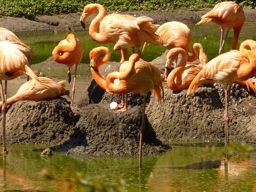 Die Pelikane  im Mai im Tierpark Berlin-Friedrichsfelde