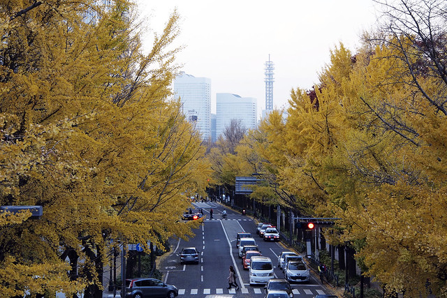 20101127_155058_横浜_山下公園