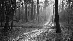 *** (pszcz9) Tags: polska poland przyroda nature las forest mgła fog mist strumień stream słońce sun poranek morning pejzaż landscape drzewo tree forestimages bw blackandwhite monochrome czarnobiałe beautifulearth sony a77 grudzień december