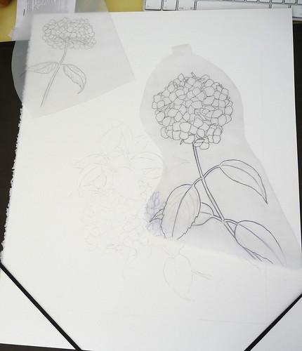 Hydrangea composition