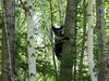 Bear Cub July 12