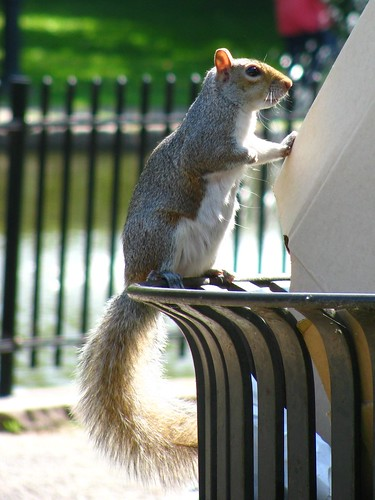 Hungry Connecticut Squirrel
