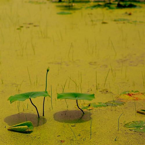 Waterweed #5