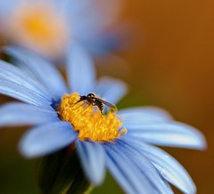 Collecting Nectar