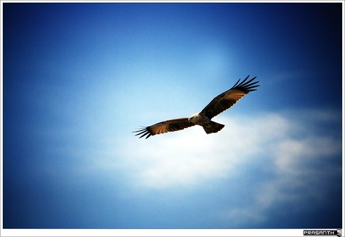 An Eagle Flying Alone...
