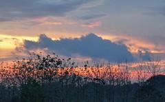 Leaves Paint Sky (Reinalasol) Tags: trees sunset sky nature silhouette clouds skyscape landscape flickr sundown dusk silhouettes land vista panama 2009 cloudscape april2009 panama2009 reinalasol