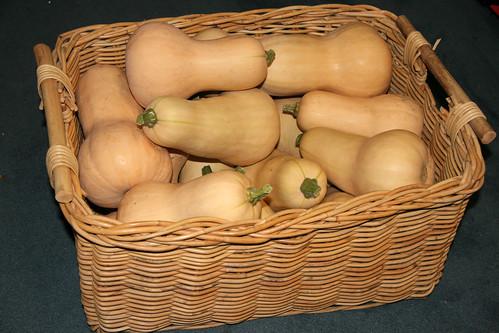 Butternut Squash Harvest Skippy S Vegetable Garden