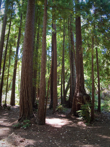 Redwoods by you.