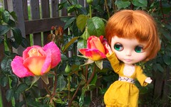 Autumn is Rose Time!