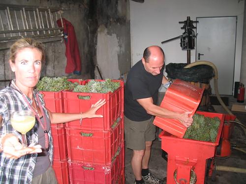 Verarbeitung der Trauben im Keller
