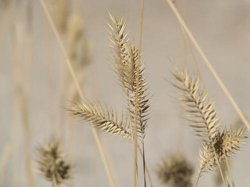Fall Grain
