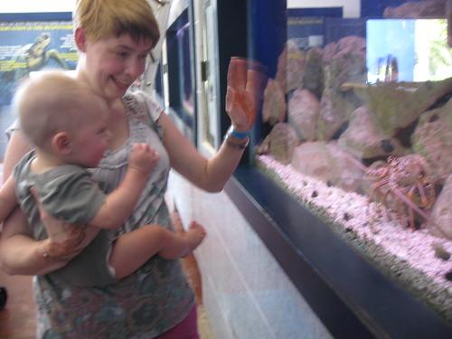 Hi crustacean!