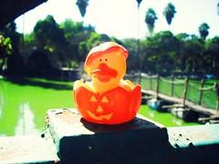 Waiting... ( Jovas  ) Tags: park parque orange lake green halloween pumpkin toy lago rubber pato calabaza juguete patito fujifilmfinepixj10 pumpkinrubber halloweenrubber