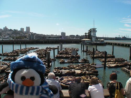 SANY0143 Sea Lions