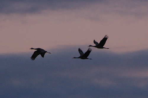 5cranes-against-dark-sky.jpg