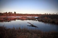 Fall Pond with late Afternoon light (hz536n/George Thomas) Tags: november trees sky fall sunrise pond lab michigan canon5d upnorth 2009 prescott smrgsbord cs3 labcolor ogemawcounty ogemaw lightroombeta3 p1f1 ef24105mmf4lusm