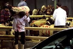 Opferfest 02 (Aschevogel) Tags: egypt cairo ägypten kairo kahire kurbanbayrami eiduladha feastofsacrifice opferfest