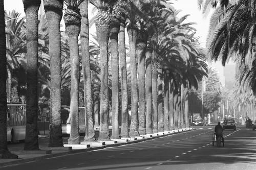 Blvd. Rashid, Casablanca.