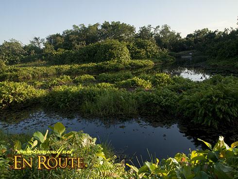 Sungei Buloh Freshwater Pond