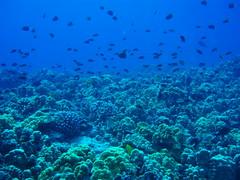 Diving Big Island
