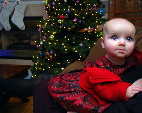 Sadie's First Christmas Eve
