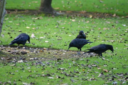 20090919 Edinburgh 20 Royal Botanic Garden 487