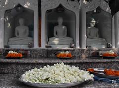 Celebrating Buddha Purnima -2011 -8 (HamimCHOWDHURY  [Active 01 Feb 2016 ]) Tags: life red portrait blackandwhite white black green nature canon eos colorful faces blu sony surreal dhaka vaio rgb bangladesh gettyimages dlsr 60d incrediblebengal 595036 framebangladesh gettyimagesbangladeshq2
