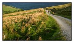 Homeward Bound (Sylvia Slavin ARPS (woodelf)) Tags: school sunshine bluebells evening walk yorkshire barns panasonic gill dales swaledale ghyll gunnerside lx5