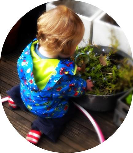 helping garden
