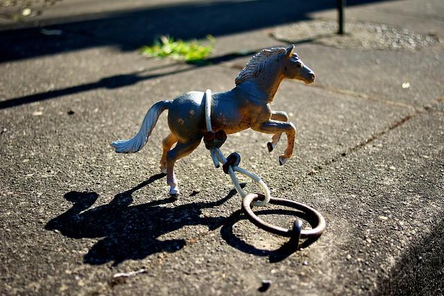 Portland Horses