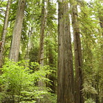 Redwood National Park thumbnail
