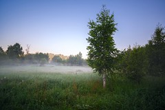 Summer misty morning in wild meadows of Russia (czdistagon.com) Tags: morning dawn fog sunrise nature landscape mist summer light forest outdoor sky season beautiful foggy tree view misty field meadow scenic wood spring grass rural beauty scene tranquil water sunset autumn country beam dew scenery green foliage fresh dusk flora natural ray environment land