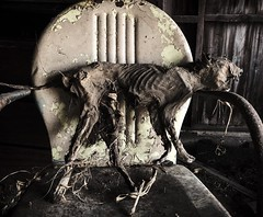 even the pets are abandoned around here..(cowboy house) (Aces & Eights Photography) Tags: abandoned abandonment decay ruraldecay oldhouse abandonedhouse petdecay