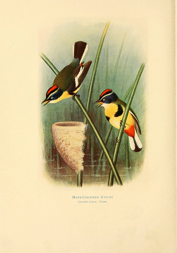 020- Siete colores-Birds of La Plata  1920