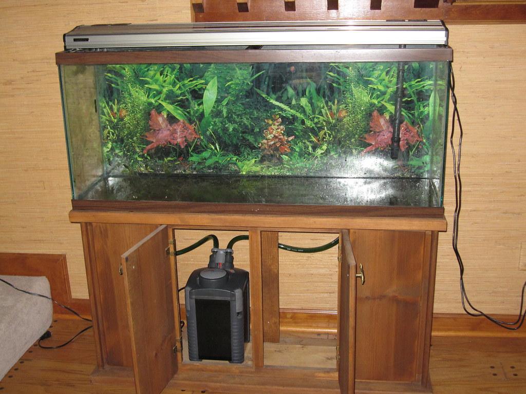 55gal Aquarium Setup