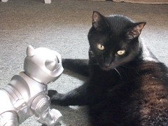 Jack & Robo (leta_miller) Tags: cat blackcat jack robot checkingout robokitty