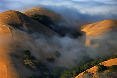 fingers of fog flowing over the diablo foothills (Marc Crumpler (Ilikethenight)) Tags: california morning trees summer usa fog clouds canon landscape hiking trails hills explore bayarea eastbay livermore frontpage alamedacounty ebrpd morganterritory eastbayregionalparkdistrict canon70300isusm 40d specialpicture ebparks canon40d ebparksok