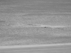 DSCF0896_1 (Stinky Cha Cha Bingo) Tags: whale loungeroom lorne