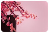 hanging by a [pink!] moment... (alvin lamucho ©) Tags: pink plant garden japanese dof bokeh magenta monotone minimal pot hanging moment oriental hang plantpot japanesestyle plainbackground 70200mmlens 450drebel eastcanon babypinkhpptkuwaitmiddle xsialvin lamucho