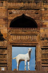 Wow ! What a pose... (Jitendra Singh : Indian Travel Photographer) Tags: travel india rajasthan ajmer in jiten jitendra jitender jitendrasingh indiaphoto bestphotojournalist wwwjitenscom gettyphotographer bestindianphotographers jitensmailgmailcom wwwindiantravelphotographercom famousindianphotographer famousindianphotojournalist gettyindianphotographer