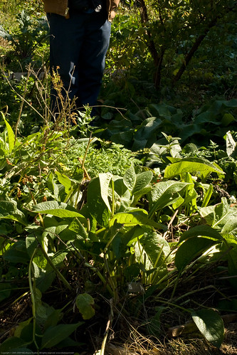 Edible Forest Gardens: light and shadow