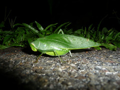 GIant insects on sidewalk