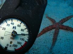 @100ft depth (getzy777) Tags: blue red sea fish scuba saudi arabia jeddah eel reef corals getzy777