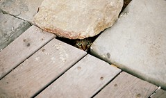 Shadow Watcher (Or Hiltch) Tags: film cat 35mm iso100 israel telaviv f5 orhiltch fujiproplusiiiso100 thecatwhoturnedonandoff fujicolorproplusii