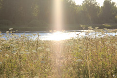 ...Somebody Up There Likes Me... (gráce) Tags: light sun sunlight flare lensflare summer nature landscape pond lake grass flower flowers meadow tree trees forest canon canoneos550d coollighteffect