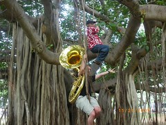 Tuba Monkeys in the Jungle (Designer Michael) Tags: music tree island hawaii vines oahu jungle tropicalisland monkeys tuba tropicalparadise hawaiianvacation monkeyinatree islandvacation tropicalmusic musicalinsturment