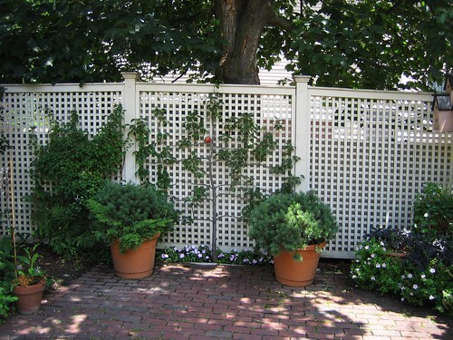 Trellis Fence @ Salem Garden Tour