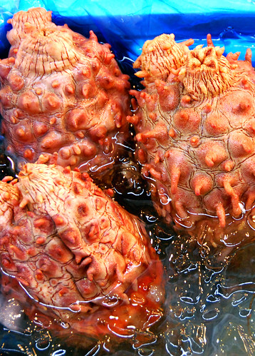 unidentified sea creature, tsukiji fish market