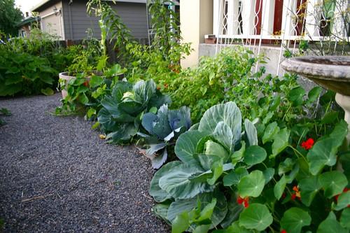Edible front border